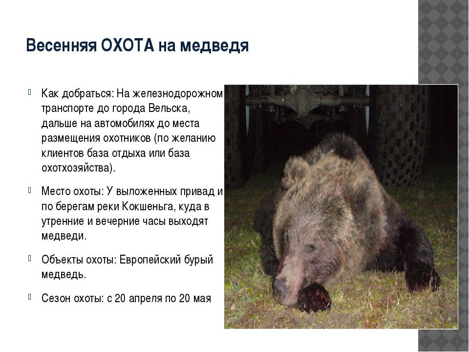 Весенняя ОХОТА на медведя Как добраться: На железнодорожном транспорте до гор...