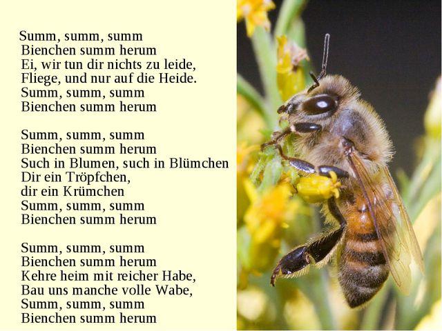Summ, summ, summ Bienchen summ herum Ei, wir tun dir nichts zu leide, Fliege...