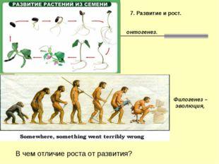 7. Развитие и рост. Филогенез – эволюция, онтогенез. В чем отличие роста от р
