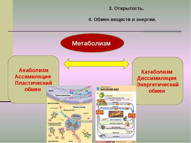 3. Открытость. 4. Обмен веществ и энергии. Метаболизм Анаболизм Ассимиляция П...