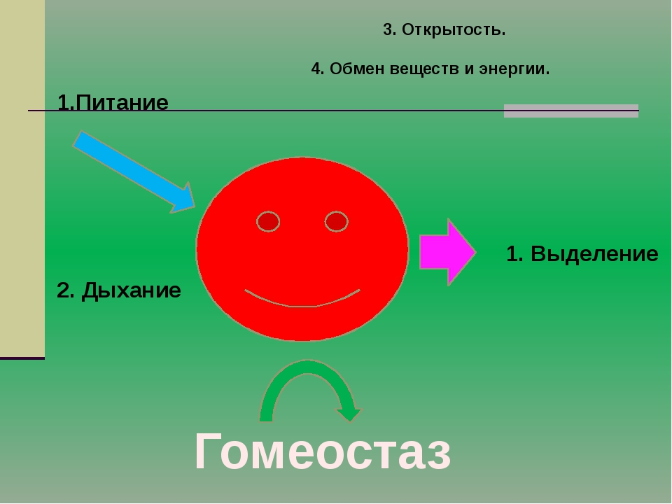 3. Открытость. Питание 2. Дыхание 1. Выделение Гомеостаз 4. Обмен веществ и э...