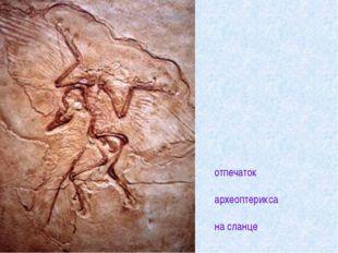 отпечаток археоптерикса на сланце
