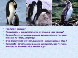 Где обитают пингвины? Почему пингвины не могут летать и как это сказалось на