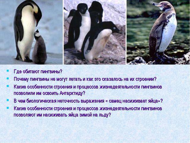 Где обитают пингвины? Почему пингвины не могут летать и как это сказалось на...