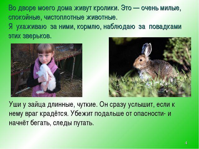 Во дворе моего дома живут кролики. Это — очень милые, спокойные, чистоплотные...