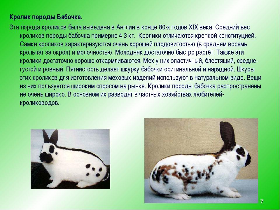 Кролик породы Бабочка. Эта порода кроликов была выведена в Англии в конце 80-...