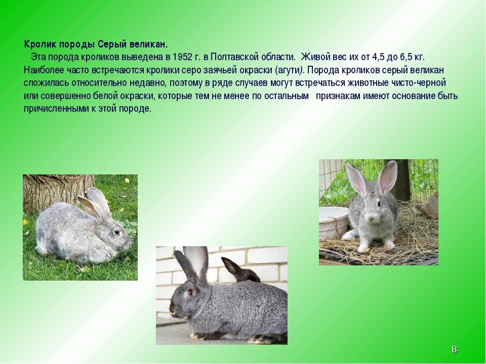 * Кролик породы Серый великан. Эта порода кроликов выведена в 1952 г. в Полта...
