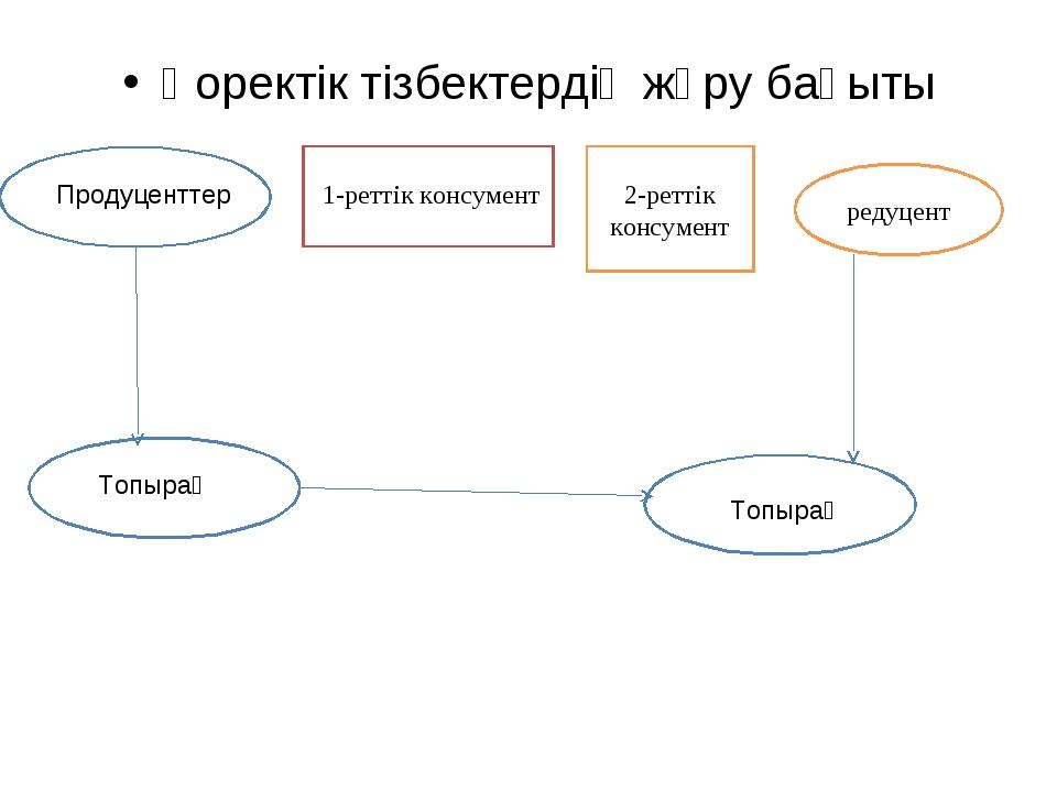 Қоректік тізбектердің жүру бағыты Продуценттер 1-реттік консумент 2-реттік ко...