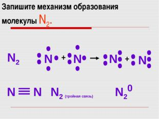 Запишите механизм образования молекулы N2. N2 N N N N N N N2 (тройная связь)