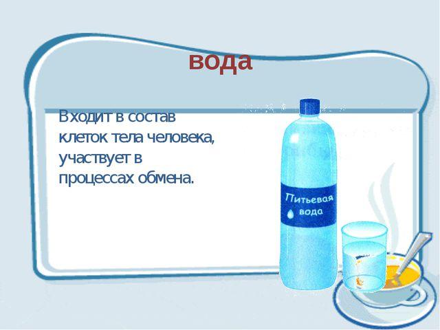 вода Входит в состав клеток тела человека, участвует в процессах обмена.