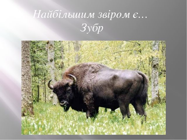Найбільшим звіром є… Зубр