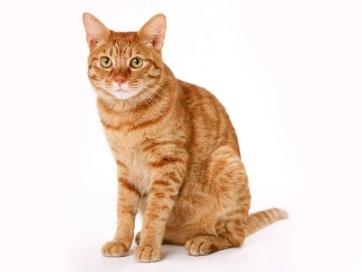 http://img0.liveinternet.ru/images/attach/c/3/83/355/83355484_cats_6__40_.jpg
