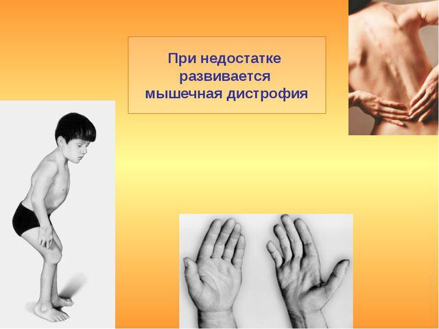 При недостатке развивается мышечная дистрофия