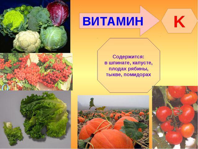 ВИТАМИН K Содержится: в шпинате, капусте, плодах рябины, тыкве, помидорах