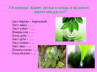 3-й конкурс. Какие листья и плоды и на каком дереве они растут? Лист берёзы –