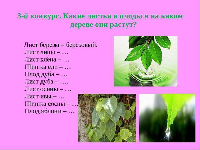 3-й конкурс. Какие листья и плоды и на каком дереве они растут? Лист берёзы –...