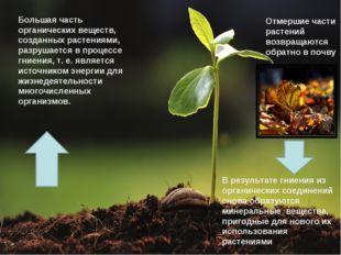 * Отмершие части растений возвращаются обратно в почву Большая часть органиче