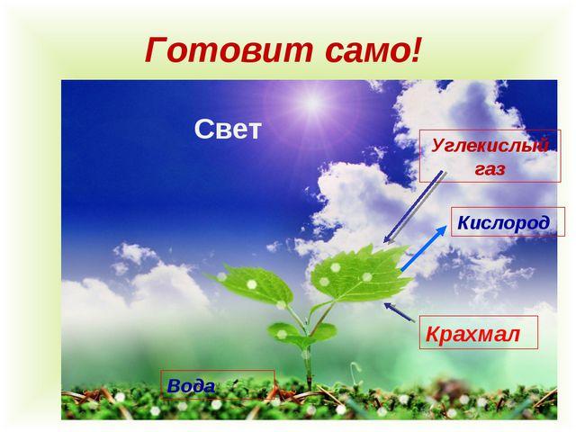 Готовит само! Углекислый газ Кислород Крахмал Свет Вода