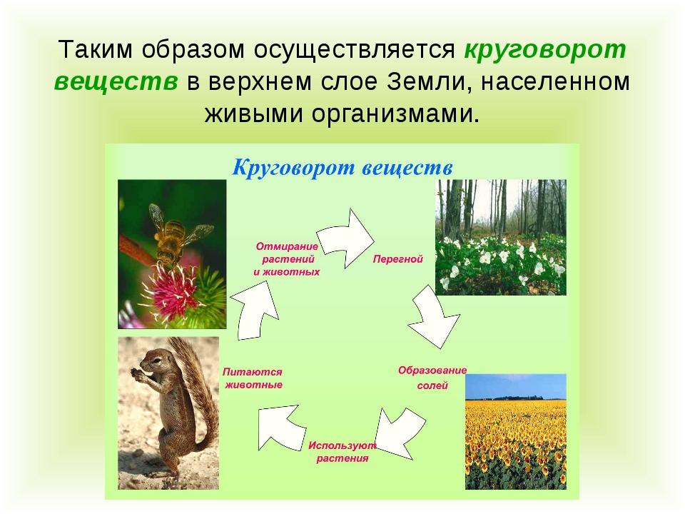 Таким образом осуществляется круговорот веществ в верхнем слое Земли, населен...