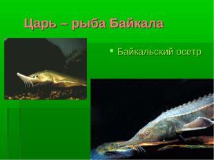 Царь – рыба Байкала Байкальский осетр