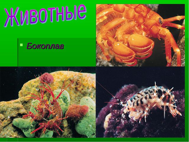 Бокоплав