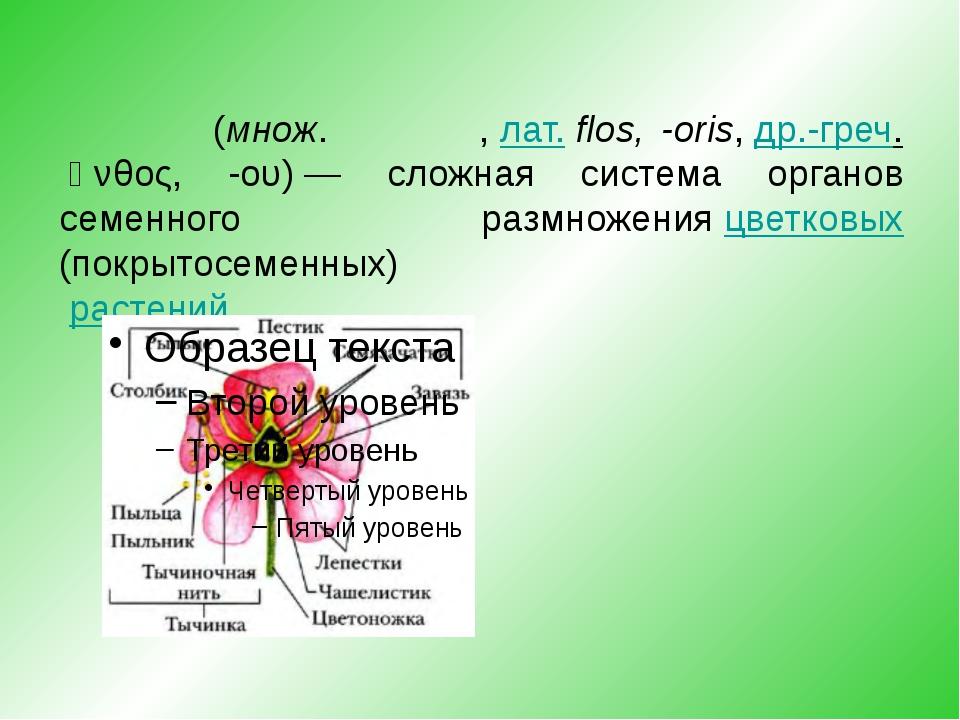 Цвето́к(множ.цветки́,лат.flos, -oris,др.-греч.ἄνθος, -ου)— сложная сис...