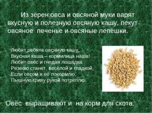 Из зёрен овса и овсяной муки варят вкусную и полезную овсяную кашу, пекут ов