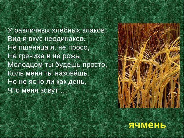 У различных хлебных злаков Вид и вкус неодинаков. Не пшеница я, не просо, Не...