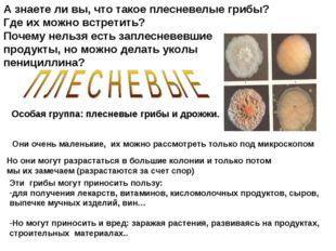 А знаете ли вы, что такое плесневелые грибы? Где их можно встретить? Почему н