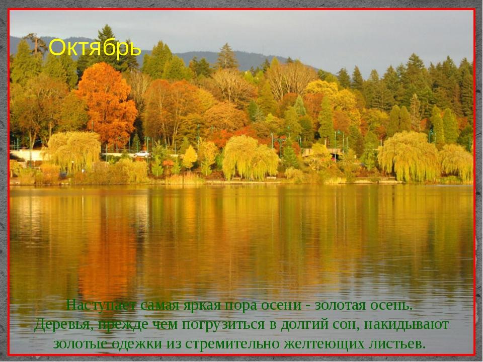 Наступает самая яркая пора осени - золотая осень. Деревья, прежде чем погрузи...
