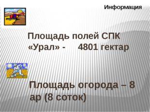 Площадь полей СПК «Урал» - 4801 гектар Информация Площадь огорода – 8 ар (8