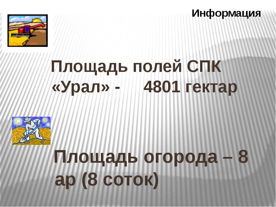 Площадь полей СПК «Урал» - 4801 гектар Информация Площадь огорода – 8 ар (8...