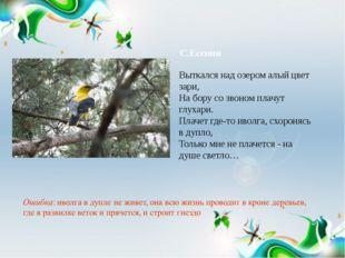 С.Есенин Выткался над озером алый цвет зари, На бору со звоном плачут глухари