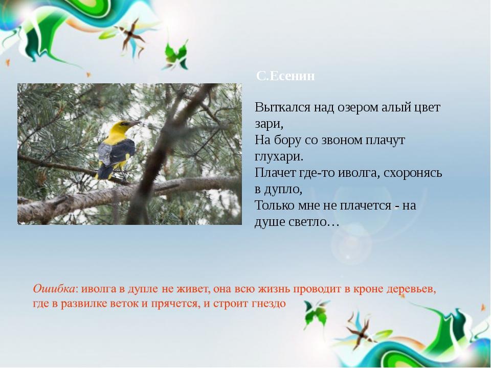 С.Есенин Выткался над озером алый цвет зари, На бору со звоном плачут глухари...