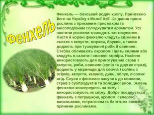Фенхель — близький родич кропу. Принесено його на Україну з Малої Азії. Це да