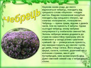 Наукова назва роду, до якого відноситься чебрець, походить від грецького слов