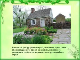 Вивчаючи флору рідного краю, збираючи пряні трави або вирощуючи їх вдома на г