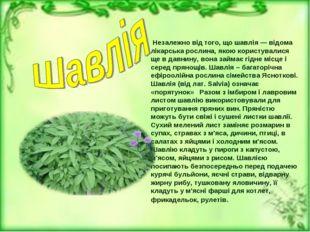 Незалежно від того, що шавлія — відома лікарська рослина, якою користувалися