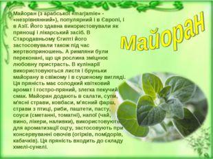 Майоран (з арабської «marjamie» - «незрівнянний»), популярний і в Європі, і в