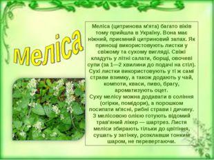 Меліса (цитринова м'ята)багато віків тому прийшла в Україну. Вона має ніжний