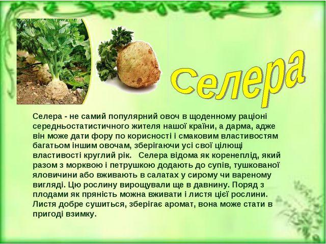 Селера - не самий популярний овоч в щоденному раціоні середньостатистичного ж...