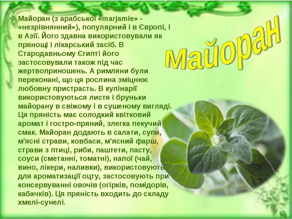 Майоран (з арабської «marjamie» - «незрівнянний»), популярний і в Європі, і в...