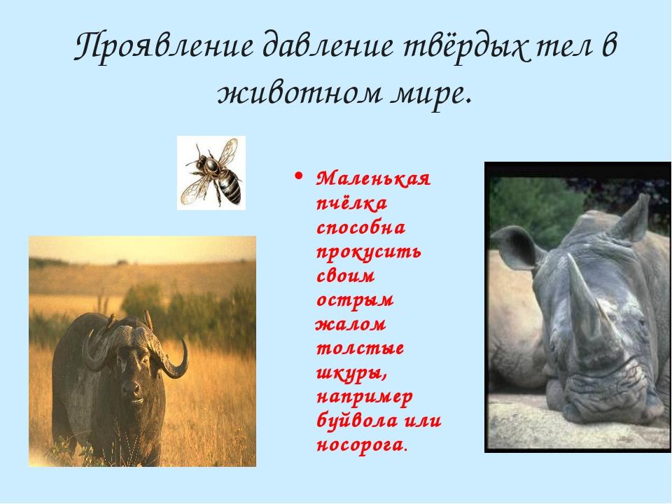 Проявление давление твёрдых тел в животном мире. Маленькая пчёлка способна пр...