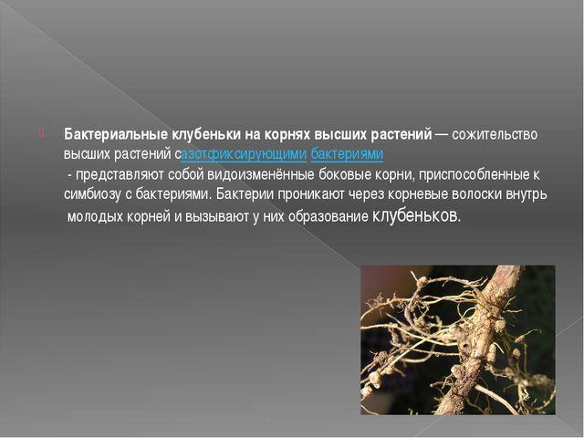 Бактериальныеклубенькинакорняхвысшихрастений—сожительствовысшихраст...