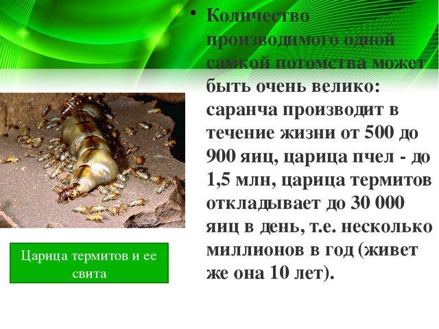 Количество производимого одной самкой потомства может быть очень велико: сара...