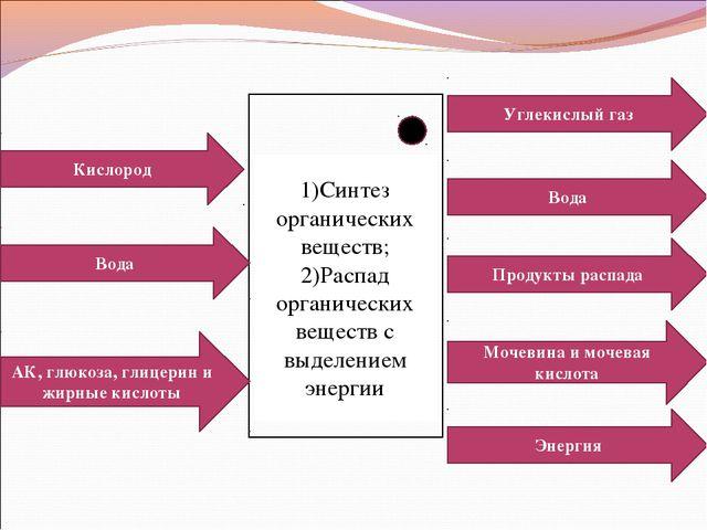 Кислород Вода АК, глюкоза, глицерин и жирные кислоты Энергия Мочевина и мочев...