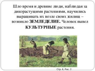 Шло время и древние люди, наблюдая за дикорастущими растениями, научились выр