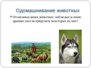 Одомашнивание животных Отлавливая диких животных: наблюдая за ними: древние с