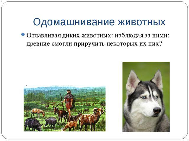 Одомашнивание животных Отлавливая диких животных: наблюдая за ними: древние с...