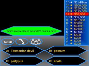 A: Tasmanian devil C: platypus B: possum D: koala 50:50 15 14 13 12 11 10 9 8